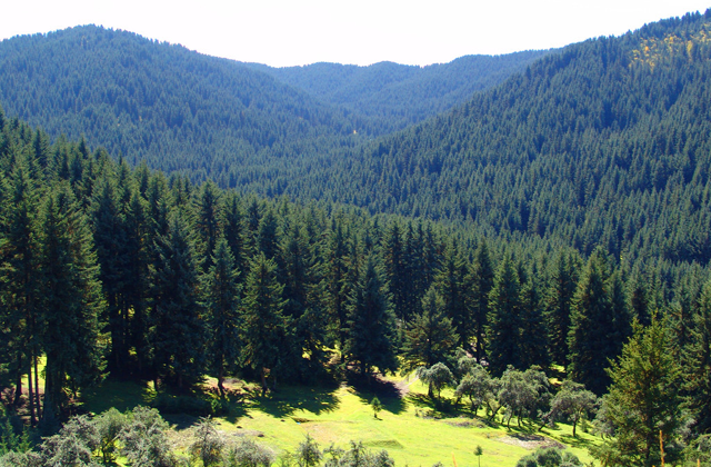 """察汗河风景区,位于西宁市82公里,距大通县城45公里,宁张公路(西宁一甘肃张掖)从景区大门经过。海拔2868--4235米,景区面积3114公顷,与省内大型水利工程黑泉水库紧密相连,景区内以石林,瀑布、杜鹃、园柏构成自然地貌和森林景观,被誉为察汗河""""四绝""""。整个景区集山水风光,突岩奇峰,柏涛云海于一体,既有江南风光的秀美,又有青藏高原雄伟。粗犷、险峻的地貌特征,给人以全新的感受。通过春、夏、秋、冬及阴、晴、雨、雪的景色变化,突出地反映了祁连园柏、杜鹃、石、云,水的显著特点,表现"""