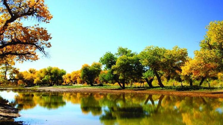 格尔木胡杨林省级自然保护区