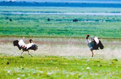 中华水塔三江源 十年保护见成效——三江源生态保护和建设...