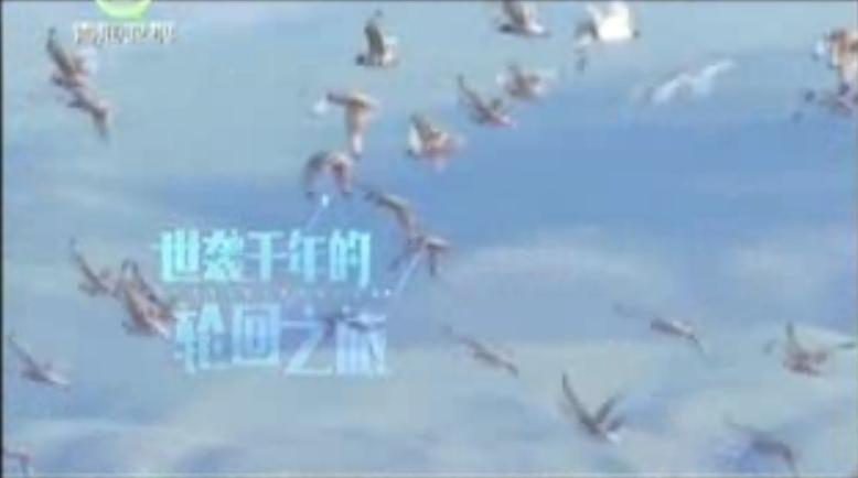 《湟鱼洄游季 再探青海湖》精彩回顾