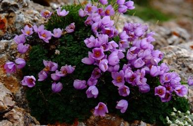 探寻青海野花