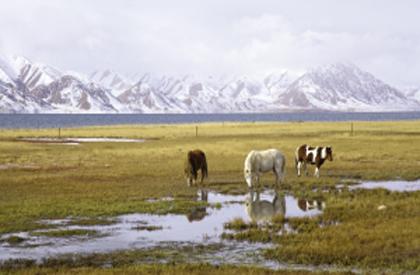 生态保护,青海迈出坚实步伐
