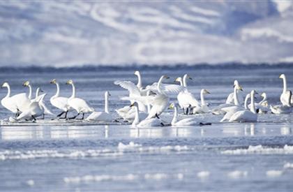 今日青海:青海冬季旅游看过来