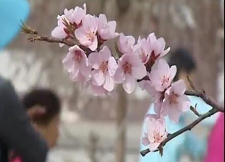 四月高原晚来的春天