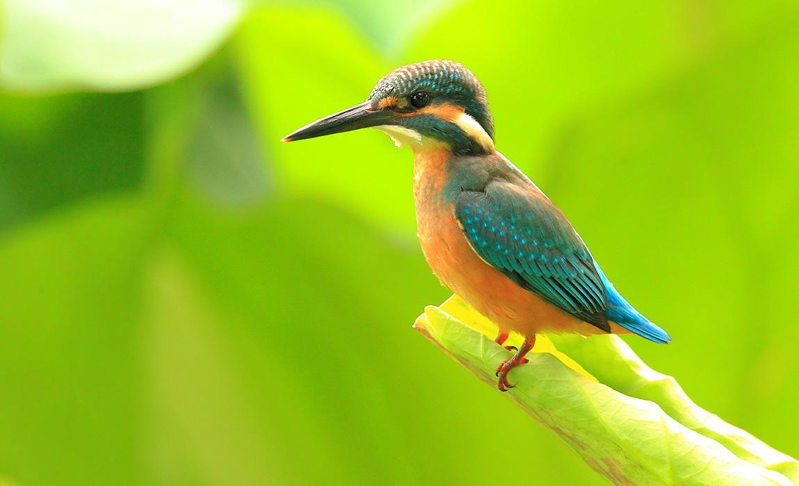 全国1/4野生鸟类青海有分布