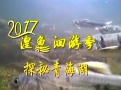 """2017湟鱼洄游季 探秘青海湖:非遗传人""""话""""裸鲤"""