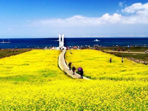 青海湖万鸟翔集生态恢复明显