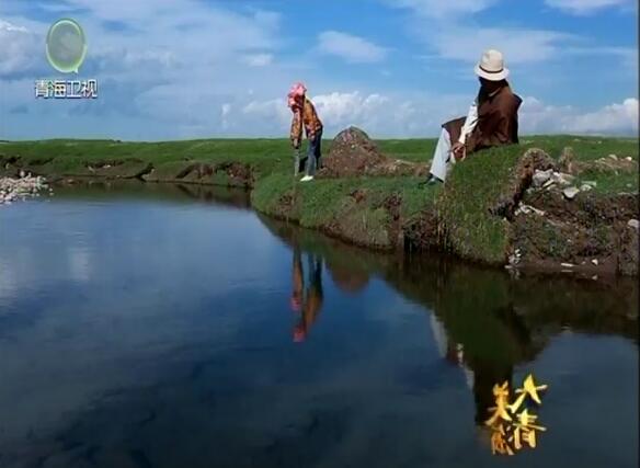 """青海湖畔的""""湟鱼效应"""""""