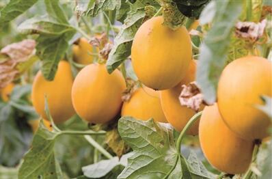 湟中:现代农业让农民富起来