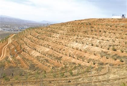 西宁南北山:青海绿化的亮丽名片