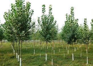 绿化,高原永恒的主题——2018年青海春季植树造林综述