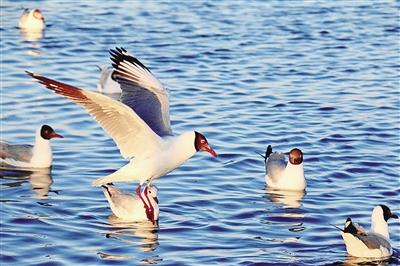 大湖之北,鹰的羽翼划过长空