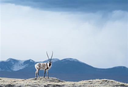 青藏高原生态与环境监测体系日益健全
