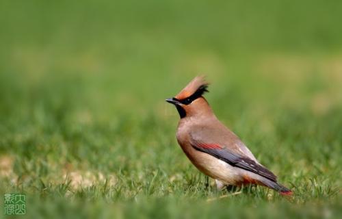 多种罕见鸟类现身南北两山