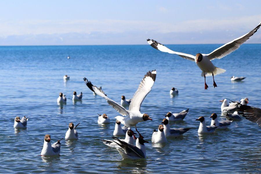 青海:生态好珍禽异兽频现身