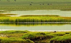 """青海,有中国最美的湿地 也有最美的""""守护神"""""""