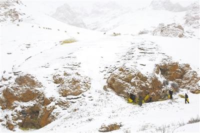 雪灾里的温情——高原精灵的守护者