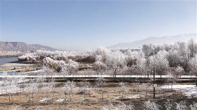 贵德出现高原罕见雾凇美景