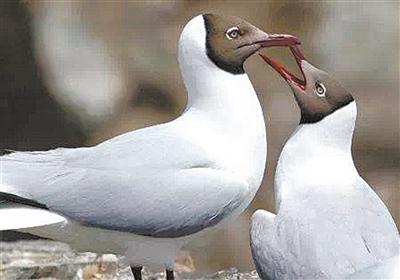 青海湖国家级自然保护区开展春季野外巡查
