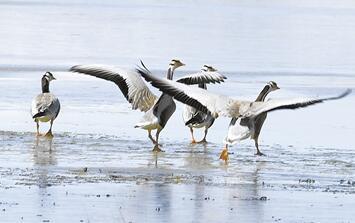 """黄河源头:野生动物的""""天然乐园"""""""