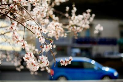 满城春色!西宁进入最美赏花季