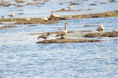 隆宝国家级自然保护区迎来鸟类繁殖季