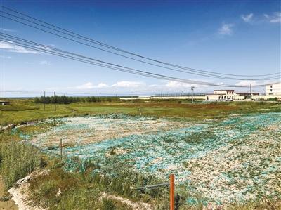 青海湖畔的綠色訴說