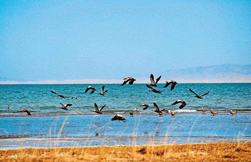 名仕亚洲官网手机版下载湖水鸟较去年同期增加1.2万多只