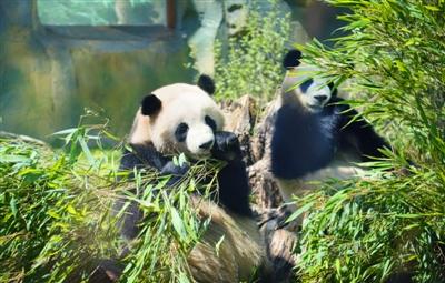 熊猫馆科普活动精彩纷呈