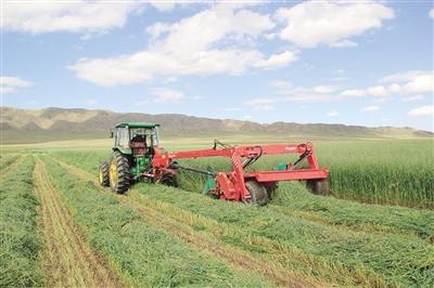 燕麦田里的全程机械化