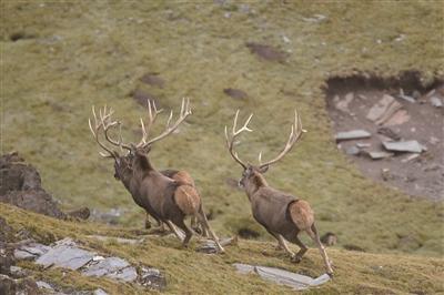 曲麻莱举办自然观察节 120名牧民4天邂逅野生动物860余只