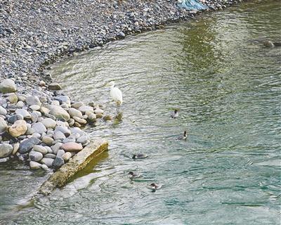 貴德:黃河之水緣何清