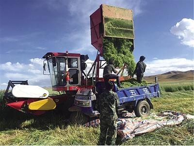 海南:生态畜牧业跨越式发展