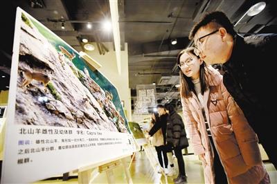 30多家生態保护公益机构齐聚西宁