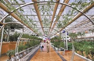 湟中縣大力推廣蔬菜産業