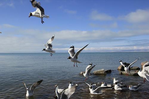 最新田野调查显示 我省鸟类达380种