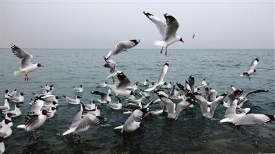 青海湖開春意俏——走進青海湖系列報道之三
