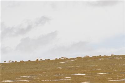【三江源,我们的国家公园】卓乃湖畔,66天的绝境坚守