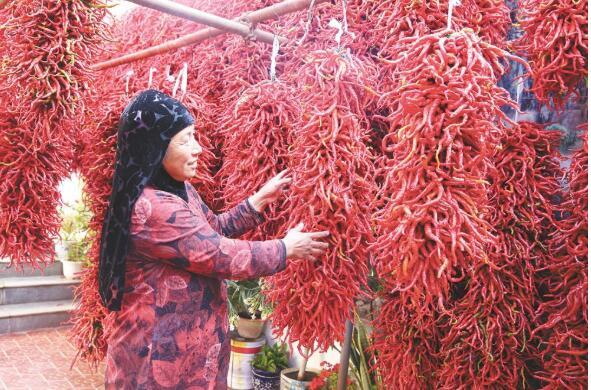 清水湾里辣椒红、产业旺