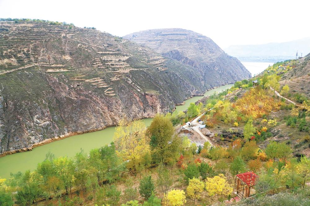 禹王峡谷北岸 种出的生态林