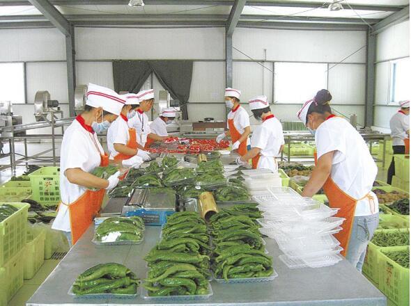 """引胜沟里的""""菜园子""""——青海农业产业强镇走访记之一"""