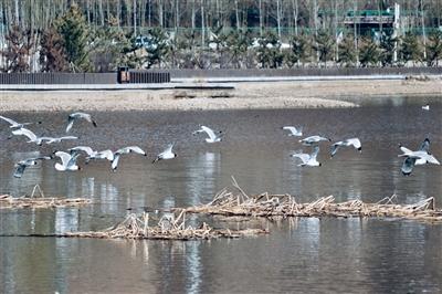 西宁市野生动※物生物多样性和物种丰富度明显提高