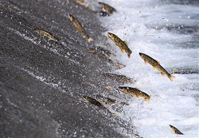 青海湖開始第六次封湖育魚