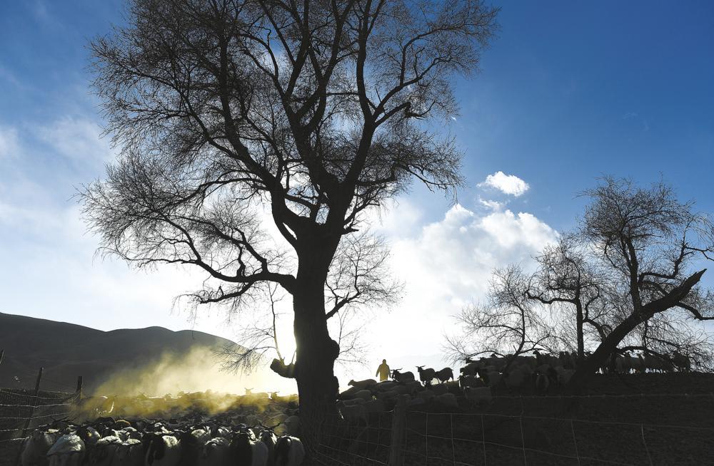 """""""老羊倌""""的新生活"""