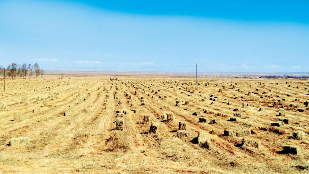 貴南:發展草產業 帶動草經濟