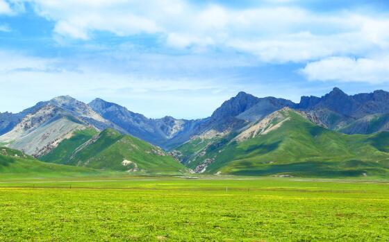 祁連山里的草木世界