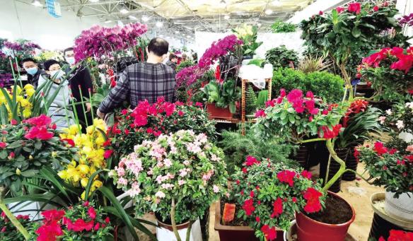 迎新春,花卉市场花俏人气旺