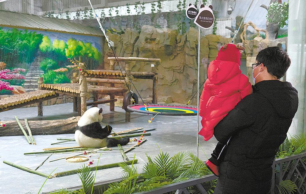 大年初一遊客在熊貓館參觀