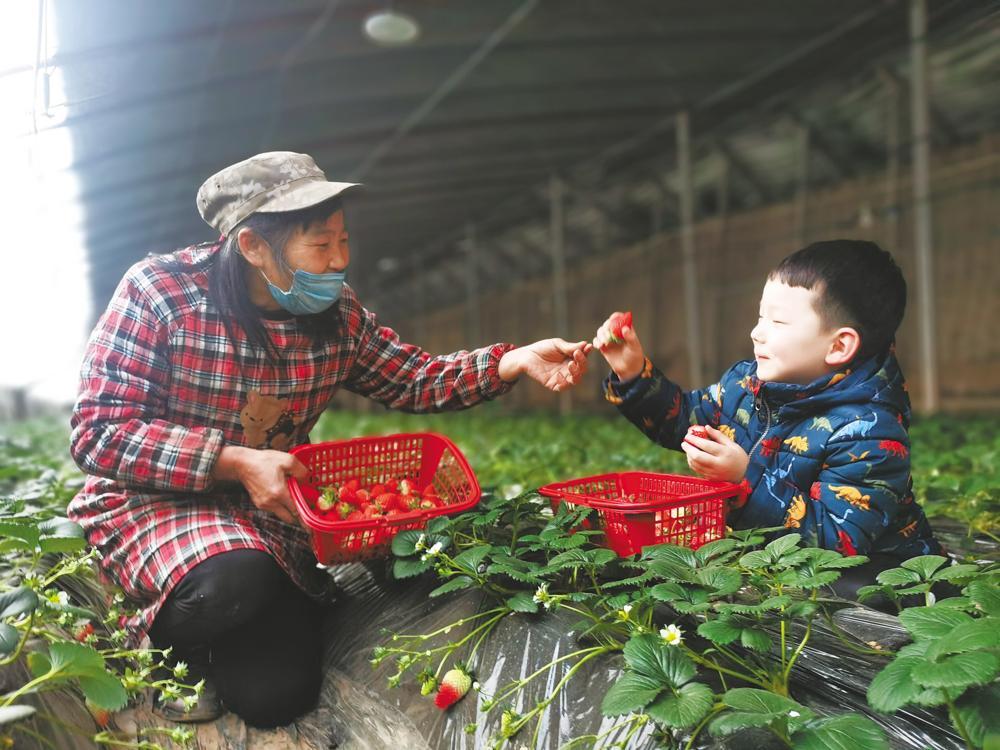 【新春走基层】小草莓 大财富