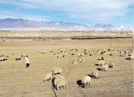 門源回族自治縣農牧業産業布局調整步伐不斷加快